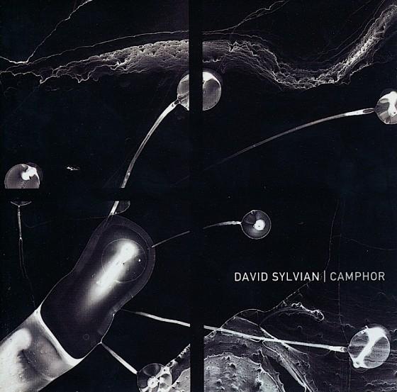 davis-sylvian-camphor-560x553
